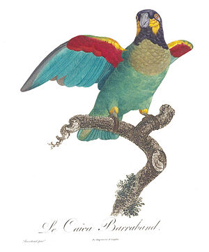 Jacques Barraband - Francois Levaillant named the orange-cheeked parrot (Pyrilia barrabandi) after Barraband