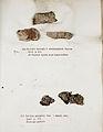 Lichenes Helvetici IX X 1833 010.jpg