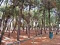 Lido di Spina - panoramio (3).jpg