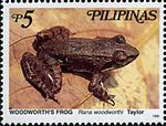 Limnonectes woodworthi 1999 stamp of the Philippines.jpg