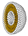 Liposome cross section flopped.png