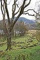 Llanycil - Woodland by Llyn Celyn - geograph.org.uk - 1612318.jpg