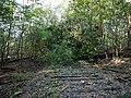 Log barrier on the Bötzowbahn in the Spandauer Forst.jpg