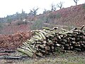 Logpile by the footpath - geograph.org.uk - 646415.jpg