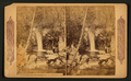 Lovers Cascade, Wildwood Canyon, California, from Robert N. Dennis collection of stereoscopic views.png