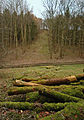 Low Hunsley Plantation 1.jpg