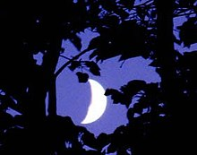 Lune à travers les branches.jpg
