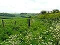 Lush spring grass - geograph.org.uk - 1313843.jpg