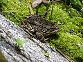 MYLF Frog (5794436732).jpg
