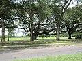 Magazine Street through Audubon Park, New Orleans, 29 June 2020 02.jpg