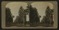 Magnolia Avenue, Riverside, California, from Robert N. Dennis collection of stereoscopic views.png