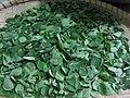 Malunggay leaves.jpg