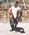 Man from Ecuador with large anaconda.jpg