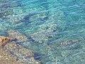 Mer et rocher à Calvi.jpg