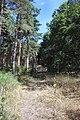 Mildenhall Woods - geograph.org.uk - 207966.jpg