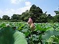 Minamitakakuda, Kagamiishi, Iwase District, Fukushima Prefecture 969-0401, Japan - panoramio (2).jpg