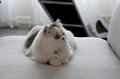 Minuet Cat.png