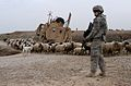 Mississippi Guardsmen recover vehicles throughout northern Iraq DVIDS245592.jpg