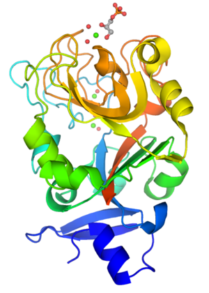 Intelectin - Monomeric structure of XEEL-CRD with bound D-glycerol 1-phosphate. The protein is colored using a blue-red gradient from the N- to the C- terminus. Calcium ions are shown as green spheres and the coordinated water molecules are shown as red spheres.
