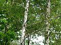 Monsalut-P1070960.jpg