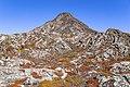 Montanha Pico Festival 2021 cover.jpg