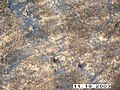 Moose Survey, Yukon-Charley, 2003 (7d3d351e-c531-41f1-ace6-08e904848072).jpg