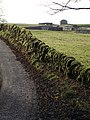 Mossy Wall - geograph.org.uk - 1054797.jpg