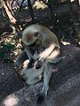 Mother & baby love.jpg