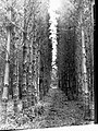 Mount Gambier Woods and Forests(GN09190).jpg