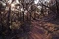 Mount Majura Casuarina Trail.jpg