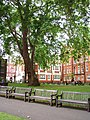 Mount Street Gardens, City of Westminster, W1 (2681310755).jpg