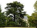 Mouzens Monsec cèdre (1).JPG