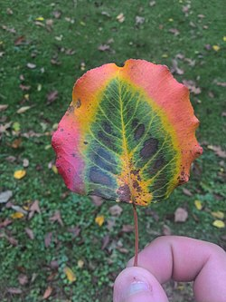 A hand holding a multi-color leaf