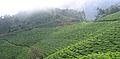 Munnar - views from Munnar (28).jpg