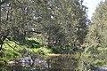 Murrurundi Pages River 005.JPG