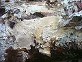 Mushroom Observer- Image- Vararia (212335).jpg