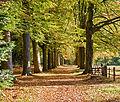 My favorite Autumn Lane (8127708793).jpg