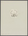 Myra fugax - - Print - Iconographia Zoologica - Special Collections University of Amsterdam - UBAINV0274 096 07 0004.tif