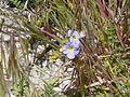 NTS - Wild Flowers 008.jpg