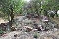 National Botanic Garden of Israel 20.jpg