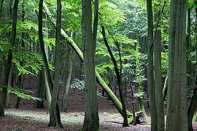 Nationalpark Jasmund Stubbenkammer.jpg
