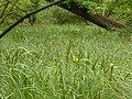 Natur, NSG Isarmündung.jpg
