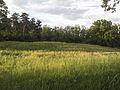 NaturschutzLassee20140524 194511.jpg