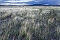 Near Cerro Verde - Flickr - aspidoscelis (1).jpg