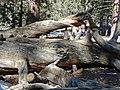 Near San Jacinto Peak, CA 2-7-14b (16295939068).jpg