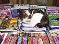 Neko Magazine 2010 (5050971997).jpg