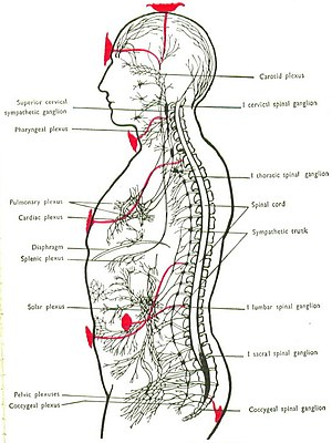 Chakra - Chakra positions in relation to nervous plexi, from a 1927 textbook