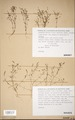 Neuchatel Herbarium Types NEU000113069.tif