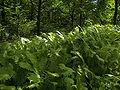 Neuer Botanischer Garten - Farnschlucht 002.jpg