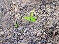 Newly born Plant.jpg
